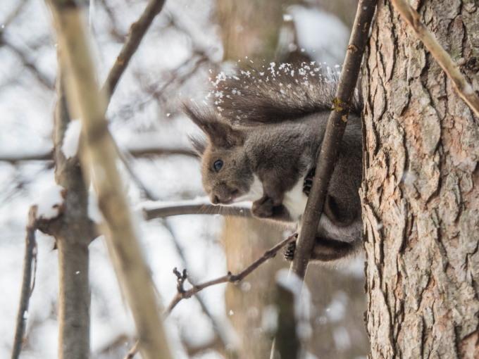 野鳥の群れに・・エゾリス君、カラマツの木の枝で固まる!_f0276498_16591429.jpg