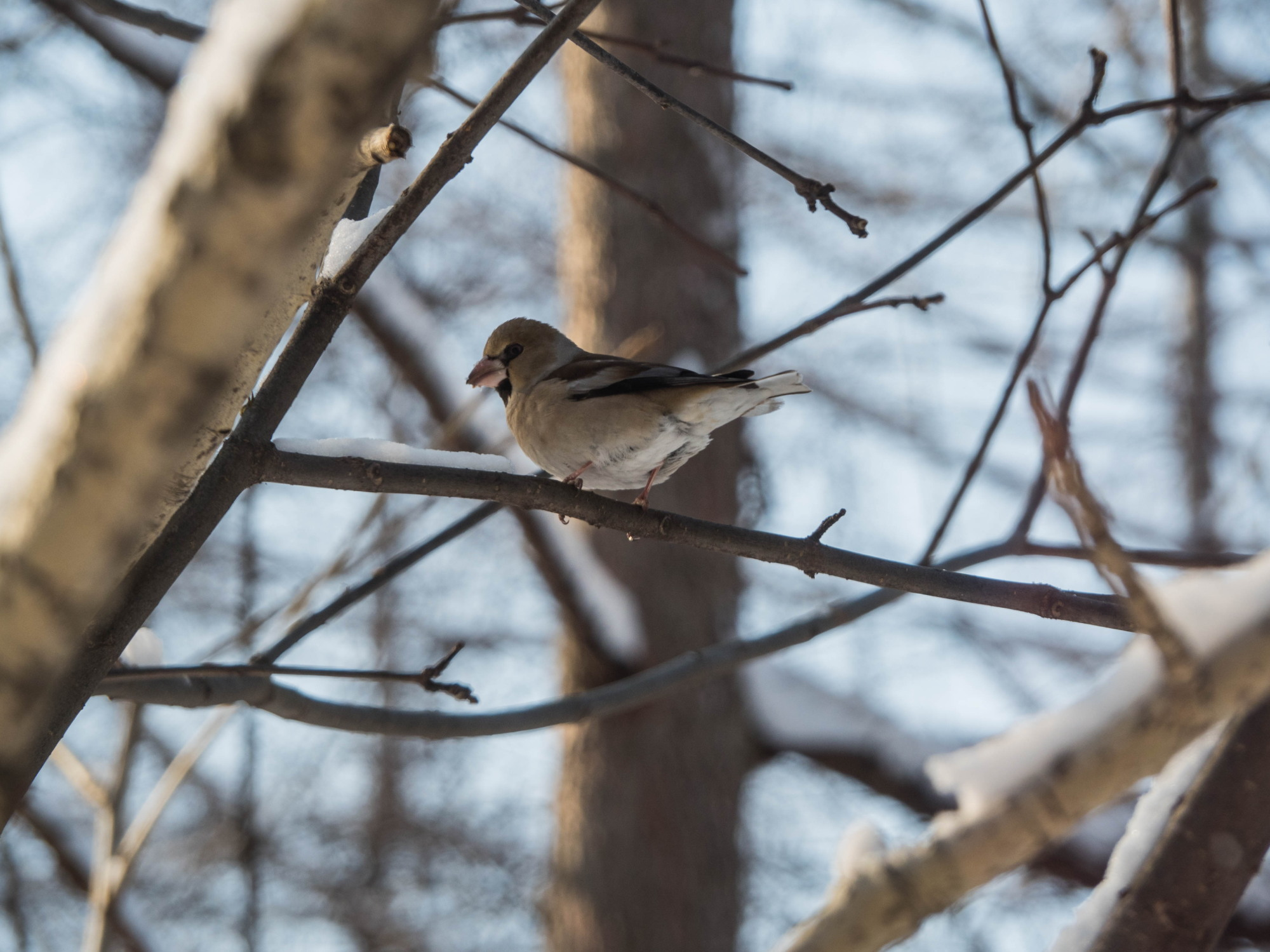 野鳥の群れに・・エゾリス君、カラマツの木の枝で固まる!_f0276498_17002100.jpg