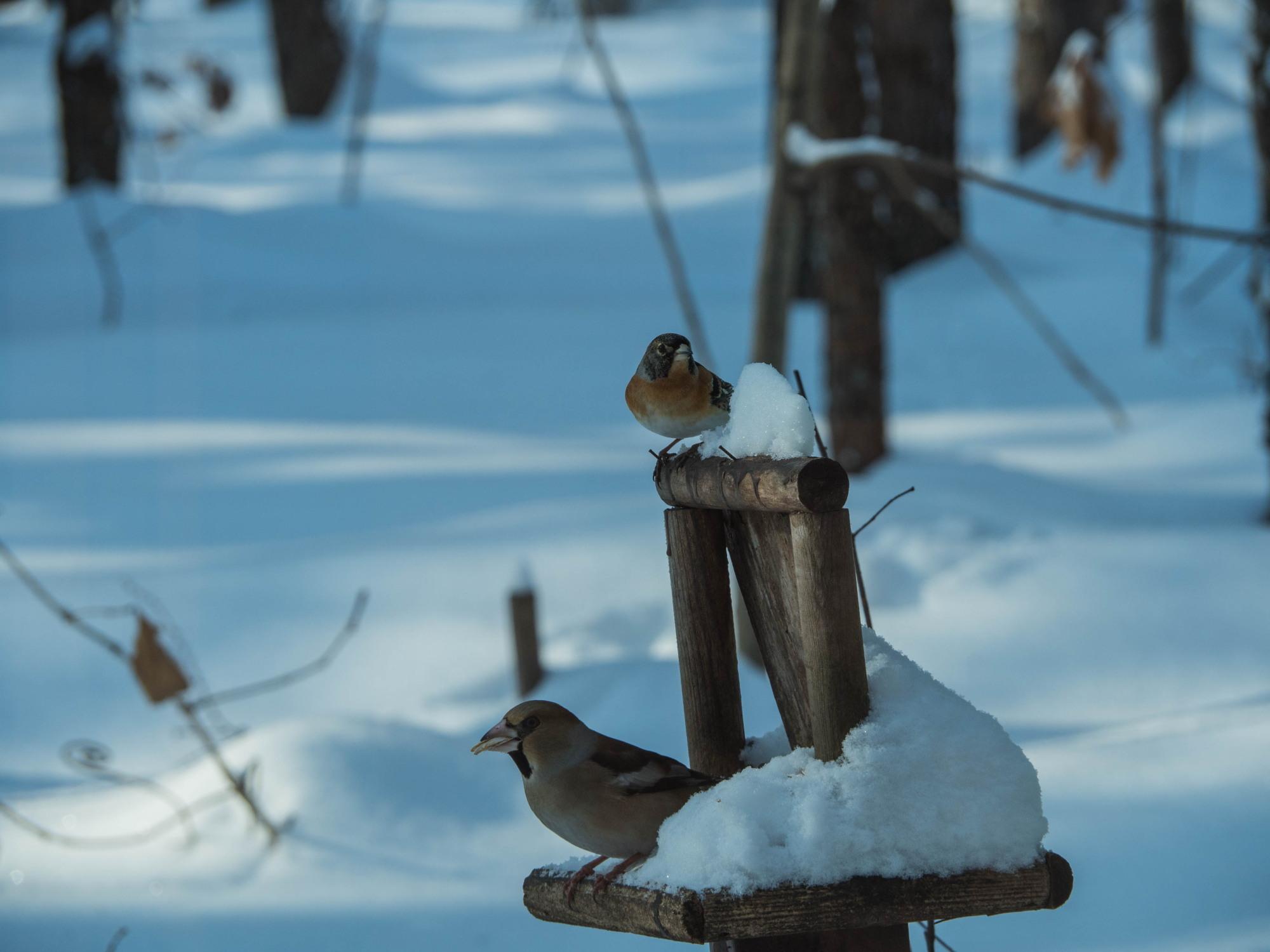 野鳥の群れに・・エゾリス君、カラマツの木の枝で固まる!_f0276498_17010504.jpg