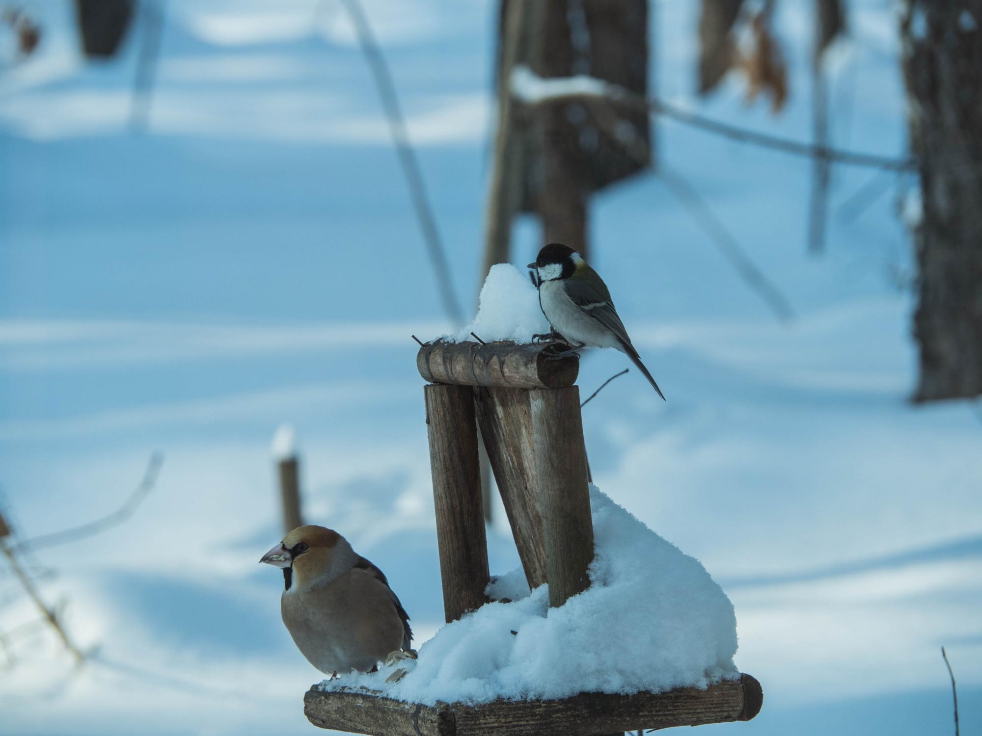 野鳥の群れに・・エゾリス君、カラマツの木の枝で固まる!_f0276498_17012246.jpg