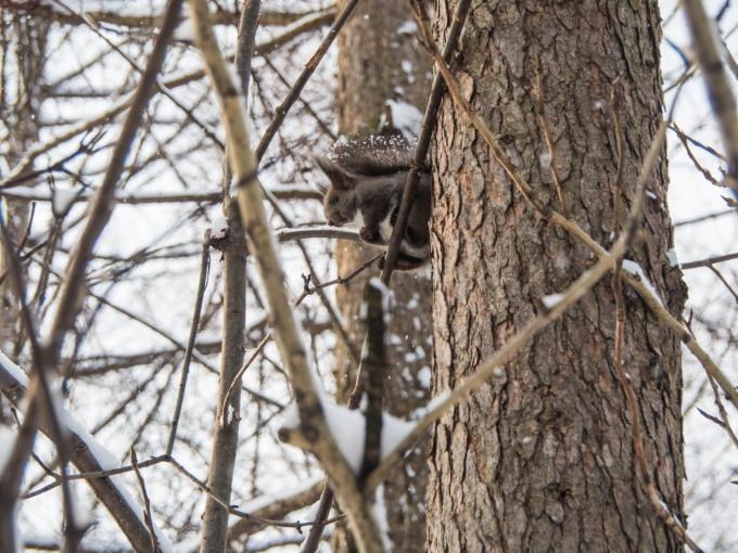 野鳥の群れに・・エゾリス君、カラマツの木の枝で固まる!_f0276498_17021900.jpg