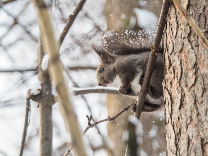 野鳥の群れに・・エゾリス君、カラマツの木の枝で固まる!_f0276498_17023782.jpg