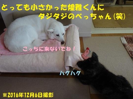f0121712_16213859.jpg