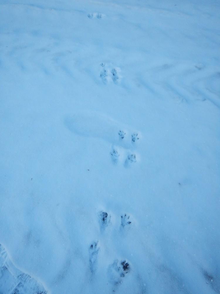 動物の足跡_c0111229_18010754.jpg