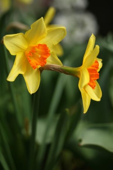 早春の花_f0158364_10553307.jpg