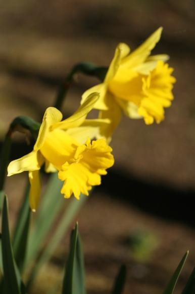 早春の花_f0158364_10554754.jpg