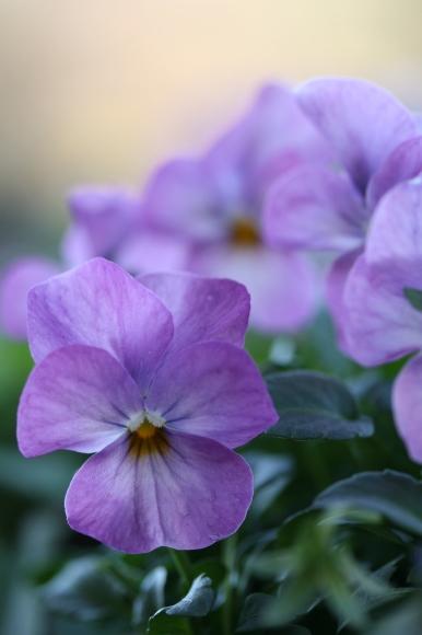 早春の花_f0158364_10570806.jpg