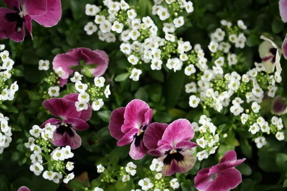 早春の花_f0158364_10573239.jpg
