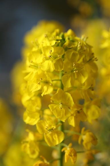 早春の花_f0158364_10575374.jpg