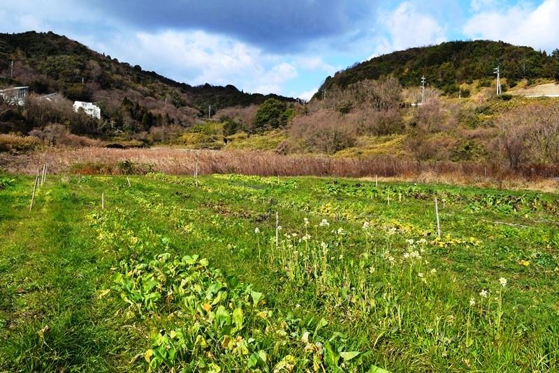 岡山県・牛窓で暮らす人たちとの優しい時間_b0053082_750560.jpg