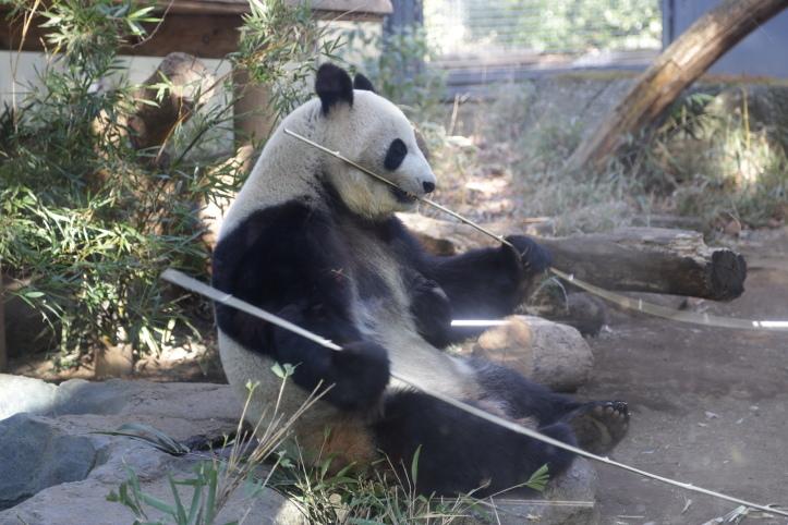 上野動物園のパンダさん_e0165983_14553102.jpg