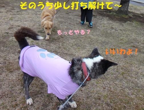 f0121712_16353767.jpg