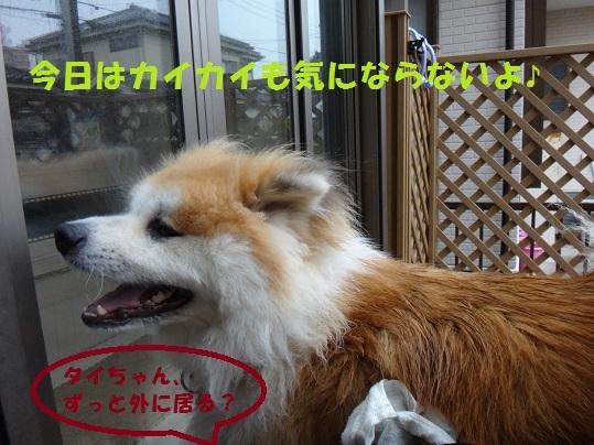 f0121712_17015309.jpg