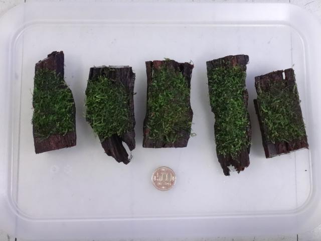 170209 熱帯魚・金魚・水草_f0189122_13144814.jpg