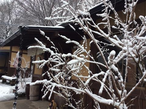 雪が降りました〜_f0006649_1111076.jpg