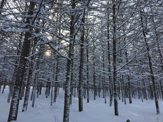雪遊び!_a0356060_12412781.jpg