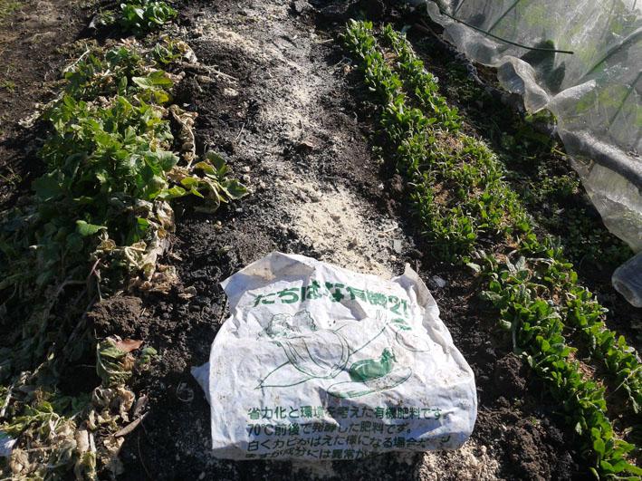 炭使い土づくり、ジャガイモの種芋植える準備完了2・8_c0014967_1861731.jpg