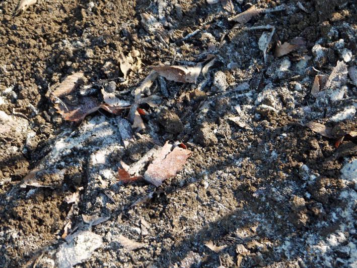 炭使い土づくり、ジャガイモの種芋植える準備完了2・8_c0014967_186191.jpg