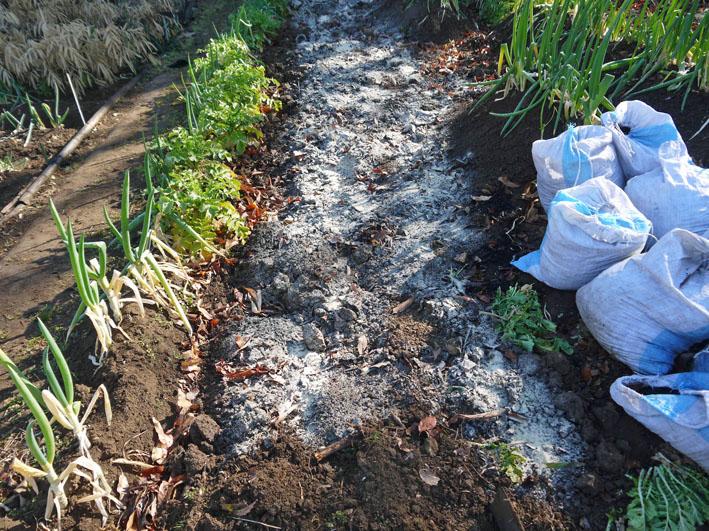 炭使い土づくり、ジャガイモの種芋植える準備完了2・8_c0014967_1862720.jpg