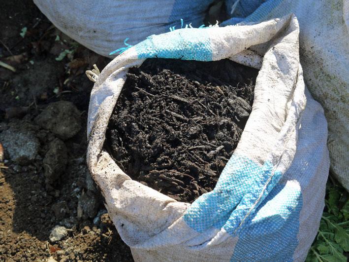 炭使い土づくり、ジャガイモの種芋植える準備完了2・8_c0014967_1863859.jpg