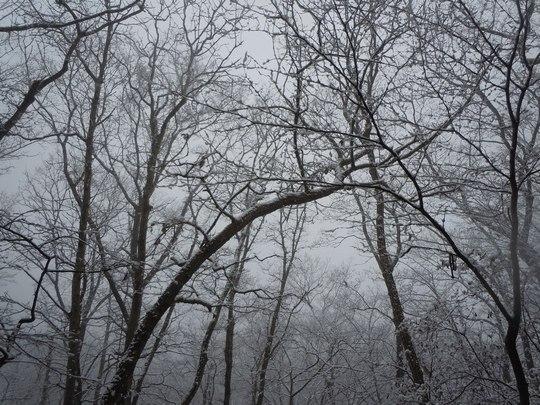 雪景色もまた ・・・_b0102572_1349143.jpg