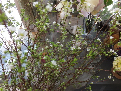 オークリーフ(春の花木)_f0049672_13412946.jpg