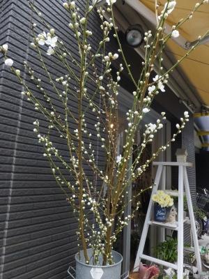 オークリーフ(春の花木)_f0049672_13423520.jpg