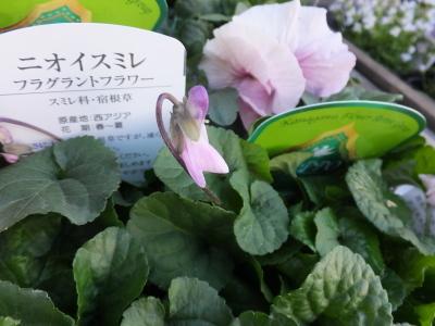 オークリーフ(春の花木)_f0049672_13455298.jpg
