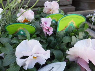 オークリーフ(春の花木)_f0049672_13461698.jpg