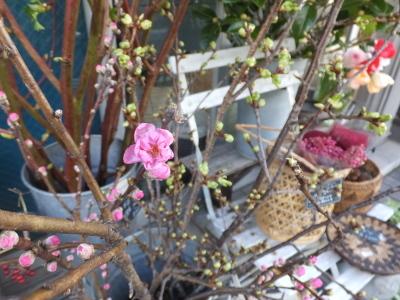 オークリーフ(春の花木)_f0049672_13472119.jpg