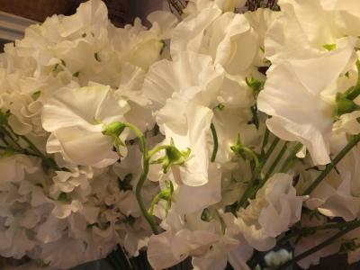 オークリーフ(春の花木)_f0049672_13484267.jpg
