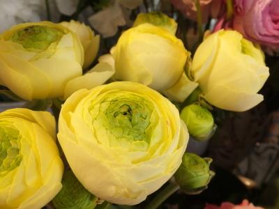 オークリーフ(春の花木)_f0049672_13492033.jpg