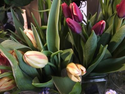 オークリーフ(春の花木)_f0049672_13503044.jpg