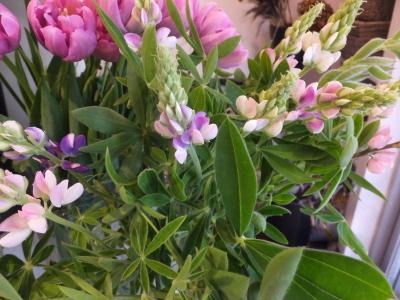 オークリーフ(春の花木)_f0049672_13504453.jpg