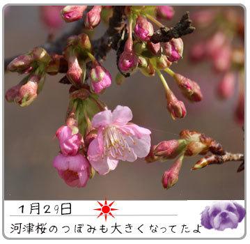 b0024183_17283293.jpg