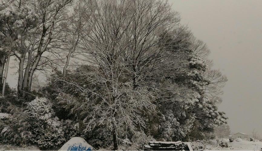 雪 降りましたね!_c0306646_17274938.jpg