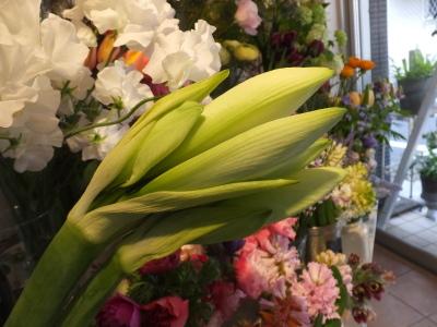 オークリーフ(青色小花の花畑)_f0049672_17280189.jpg