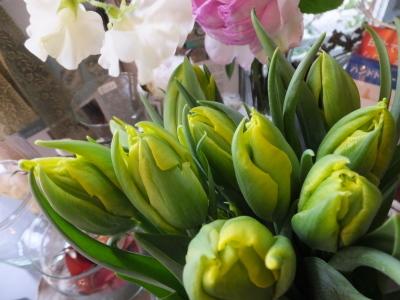 オークリーフ(青色小花の花畑)_f0049672_17290115.jpg