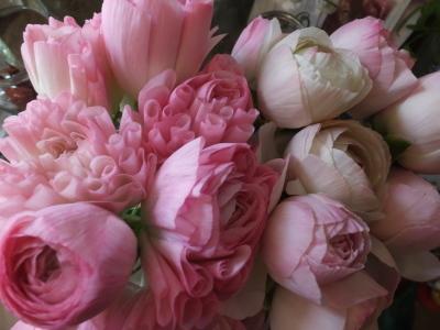 オークリーフ(青色小花の花畑)_f0049672_17293108.jpg