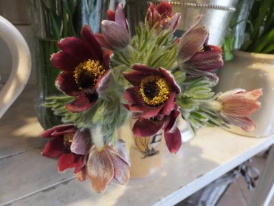 オークリーフ(青色小花の花畑)_f0049672_17310734.jpg