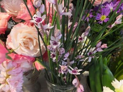 オークリーフ(青色小花の花畑)_f0049672_17312572.jpg