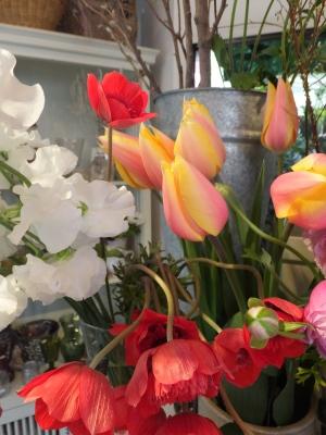 オークリーフ(青色小花の花畑)_f0049672_17321688.jpg