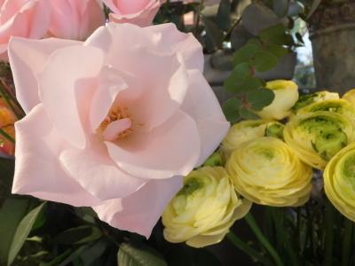 オークリーフ(青色小花の花畑)_f0049672_17323457.jpg