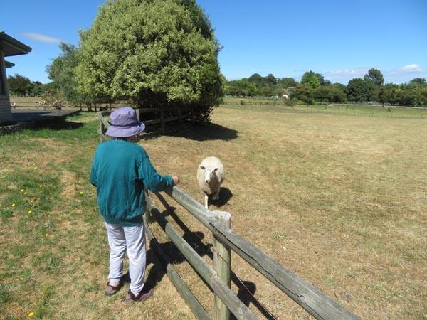 今日の羊と適当料理と夕焼けと_e0133780_16584499.jpg