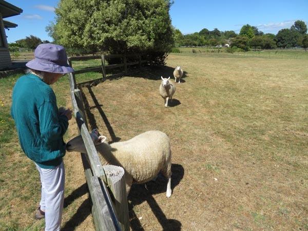 今日の羊と適当料理と夕焼けと_e0133780_16593247.jpg