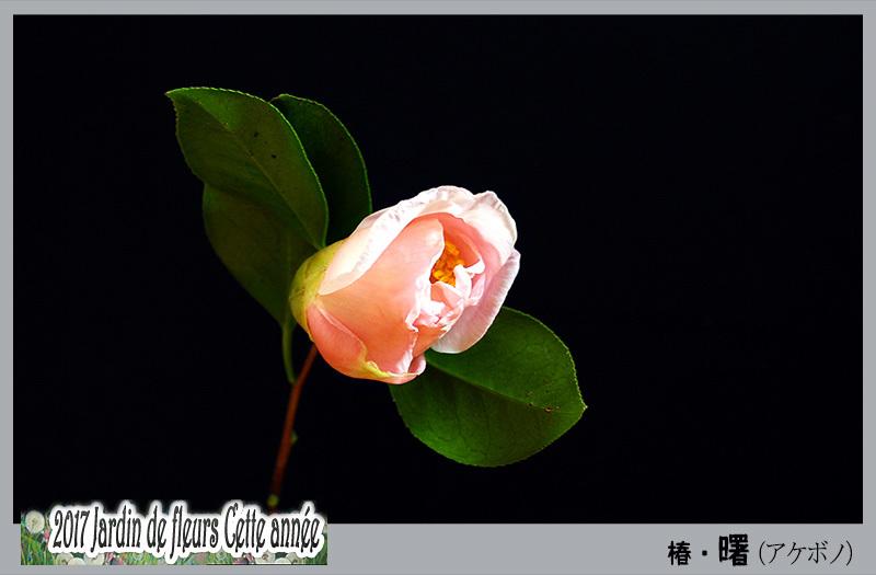 c0009981_05205277.jpg