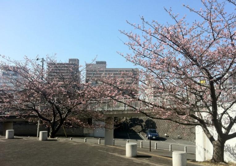 東京弁護士会,東京地方裁判所の「日本国籍の確認がとれないことを理由とする司法委員への選任拒絶」に抗議_b0206085_7251085.jpg