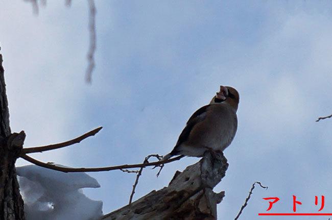 小鳥_d0162994_09291454.jpg