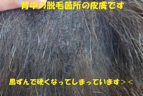 f0121712_23445634.jpg