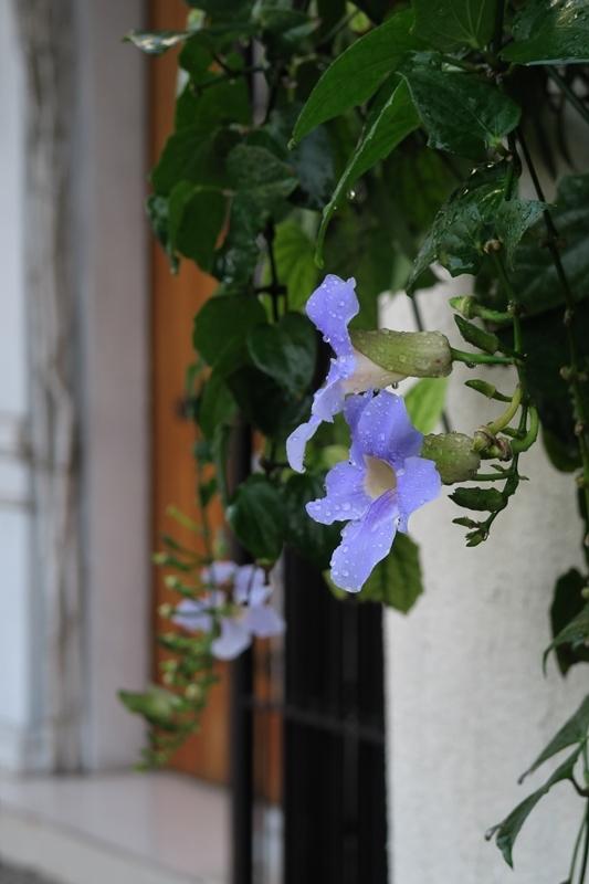 intramuros 朝のお散歩_e0364223_22320982.jpg